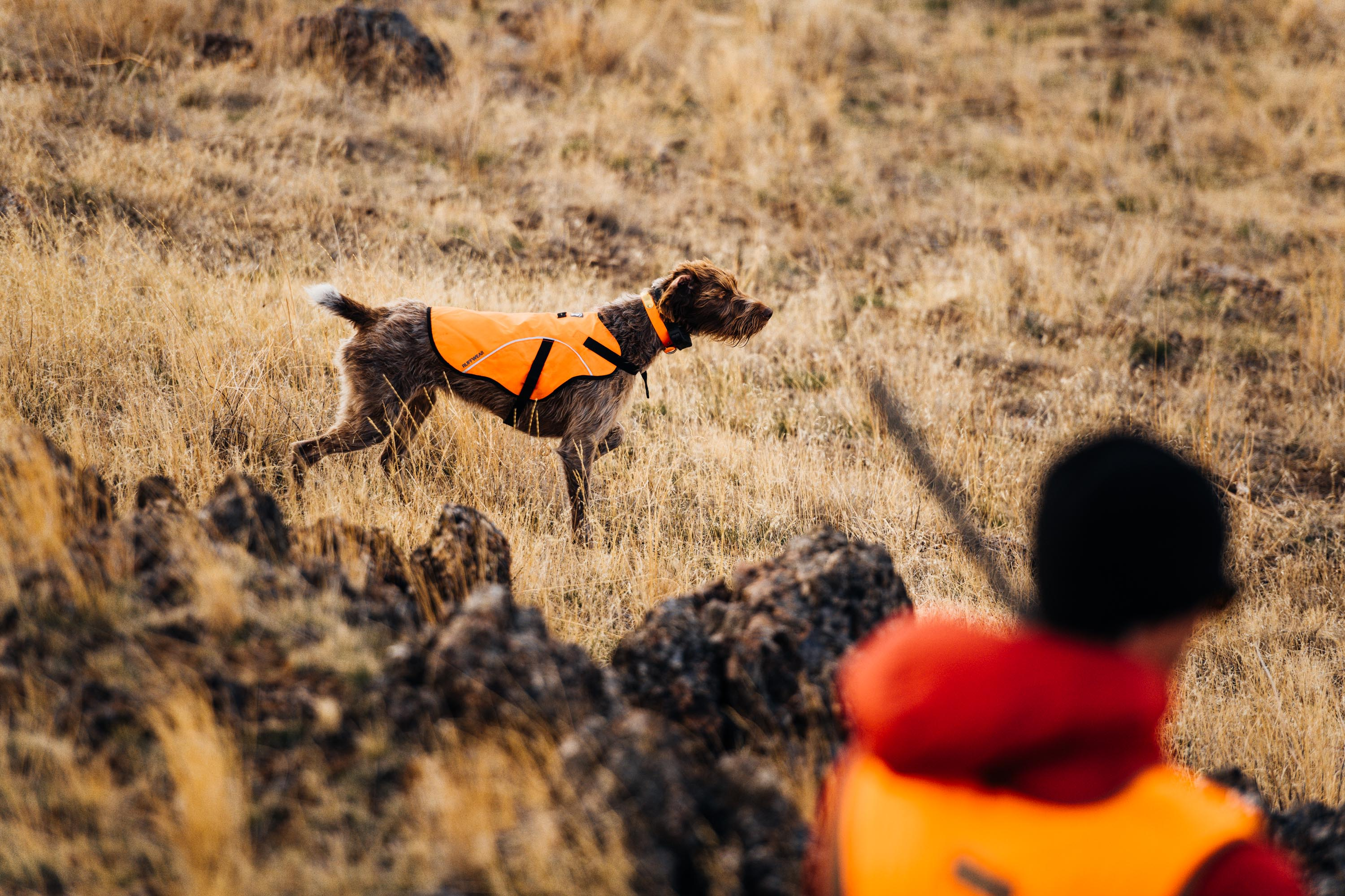 Bird Hunting in Idaho - Greg Mionske - Advertising and Editorial Photographer in Denver