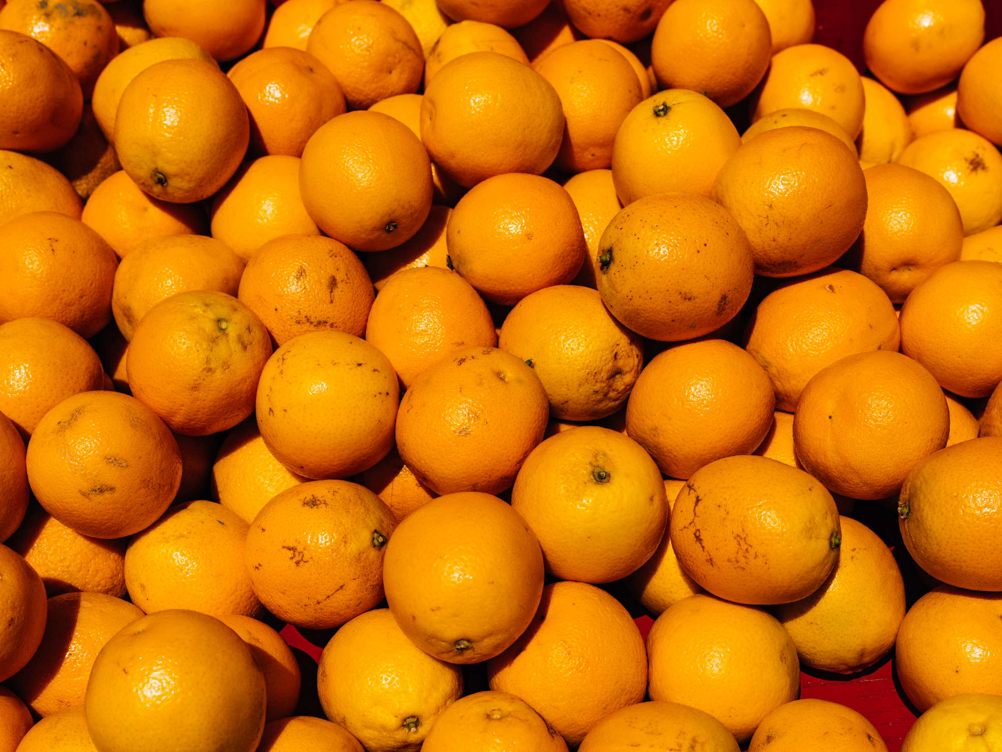 Citrus Detail - Greg Mionske - Advertising and Editorial Photographer in Denver